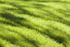 Græsplænen gødning og regn