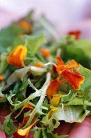 Kan du dyrker salat indendørs af en solrig vindue?