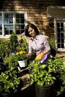 Den bedste jord blanding til potteplanter