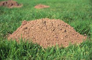 Hvordan du indstiller en skjult muldvarp fælde