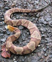 Hvordan at slippe af slange angreb