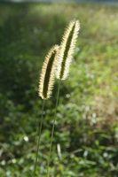 Fælles herbicider fra 1930-erne