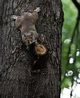 Sådan Stop egern kommer i fugl foderautomater