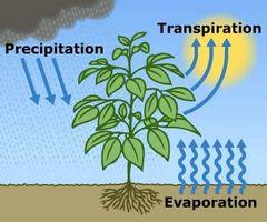 Hvordan planter får vand fra jorden?
