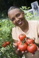 Hvordan til at plante en simpel køkkenhave