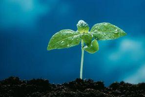 Sæson plantning Guide for grøntsager