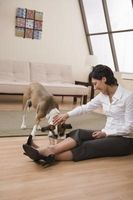 Mest holdbare gulve for kæledyr