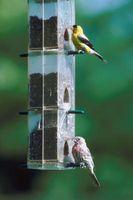Hvordan til at hænge en fugl Feeder fra en lejlighed balkon