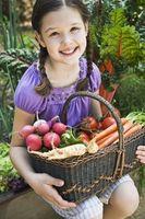 Plantning Tips for vegetabilske havearbejde