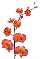 Om orkidé planter