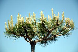 Træ gren skærende værktøjer
