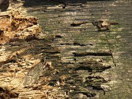 Den gennemsnitlige udgift til Spray for termitter