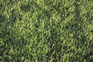 Hvordan til at befrugte & frø en græsplæne