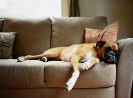 Hunde skrabe lædersofaer