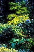 Hvordan du vælger planter til en skygge have