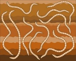 Hvordan kan bakterier, svampe, orme og insekter ændre jord?