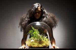 DIY gødning til en ferskvands plantet akvarium