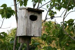 Tips til en Habitat have