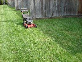 Borax på græs for lopper