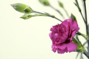 Hvad blomstrer blomst kan plantes uden for i efteråret eller vinteren i det sydlige USA?