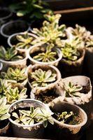 Hvordan at vokse nye planter fra en anden plante