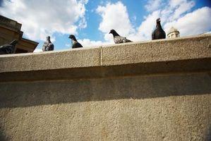 Hvordan at slippe af baghaven fugle