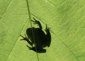 Er der en naturlig måde at slippe af med frøer?