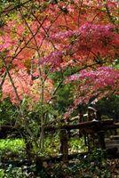 Beetle kontrol på japansk planter