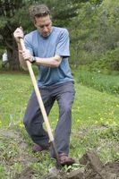 Omplantning tjørn træer i Texas