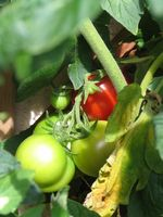 Vegetabilsk gødning Guide
