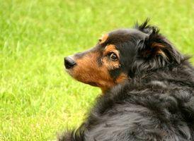 Hvordan man laver min egen kæledyr sikker Lawn Care Products