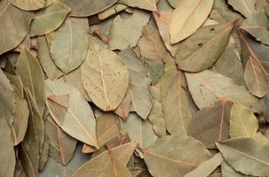 Hvor hen til identificere hvad tygge Off min bugten laurbærblade