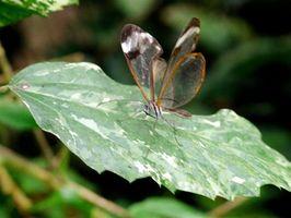Haven planen for sommerfugle