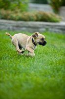 Hvordan til at holde mine hunde fra iført ned min græsplæne