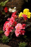 Hvordan til at rense en skvattet blomsterhave