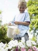 Hvordan til at vande din have klogt
