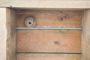 Hvordan man dræber en sværm af hvepse