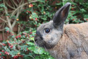 Planter, afskrække og slippe af med kaniner i haven