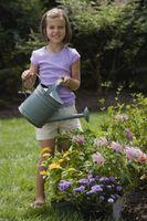 Vand, der fungerer bedst for planter