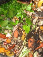 Hvordan man laver en hjemmelavet kompost Accelerator