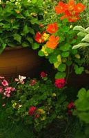 Hvordan til at plante en have i en gryde