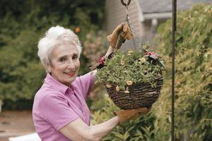 Hvordan til at plante vindue Box containere og hængende trådkurve Moss