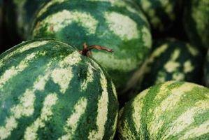 Sådan vand vandmeloner