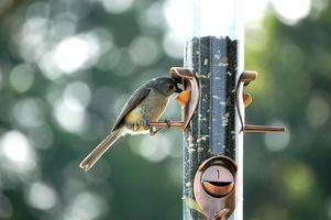 Hvilken fugl frø gøre sydlige Ohio fugle som bedst?