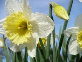 Typer af blomster til at plante i November