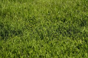 Texas Lawn Care Tips
