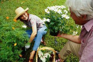 Hvordan man forebygger modermærker fra at spise en have