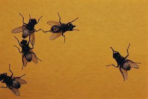 Hvordan til at dræbe myg uden kemikalier