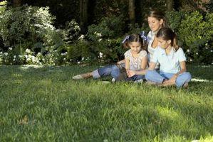 Kan du dyrker Saint Augustine græs fra frø?