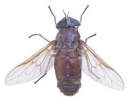 Havearbejde naturligt: Planter, der frastøder myg og fluer